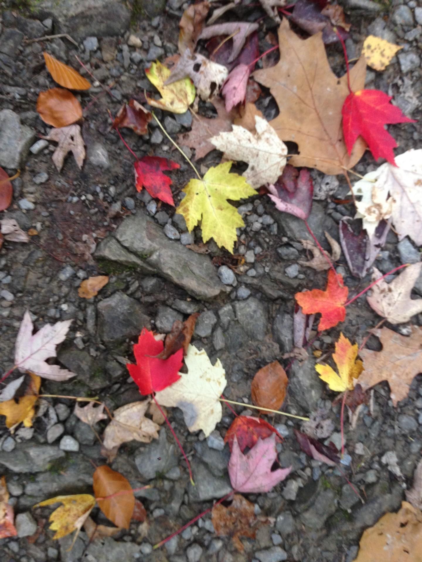 Paul Yves Poumay - feuilles d'automne